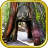 Escape Game Deserted Island Escape Game Studio
