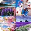 パズル – 春のシーズン Appilo