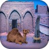 Escape Game – Desert Camel Escape Game Studio
