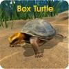 Box Turtle Simulator WildFoot Games