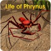 Life of Phrynus – Whip Spider WildFoot Games