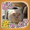 にゃんこの写真どこ変わった? 〜猫の間違い探しアハ体験〜 nekoappli
