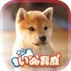 幸せの柴犬育成ゲーム3D EikoMorozumi
