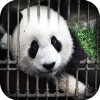 Can You Escape – Baby Panda Odd1Apps