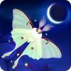 Flutter: Starlight Runaway