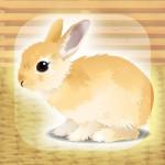 癒しのウサギ育成ゲーム(無料) Hiroki Yamada